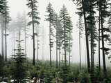 USA, Washington, Managed Forest Photographic Print by Christopher Talbot Frank