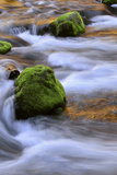 Oregon, Willamette NF. Mckenzie River Flowing over Moss-Covered Rocks Photographic Print by Steve Terrill