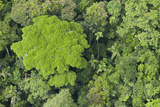 Rainforest Canopy, Yasuni NP, Amazon Rainforest, Ecuador Photographic Print by Pete Oxford