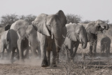 Etosha National Park, Namibia. Africa. a Herd of Bush Elephants Photo by Janet Muir