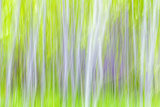 USA, Washington State, Yakima River Trail. Abstract of Aspen Trees Photographic Print by Don Paulson