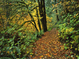 USA, Oregon, Silver Falls State Park. Scenic Park Trail Photographic Print by Steve Terrill