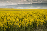 Idaho, Snake and Salmon River Basins, Wildflowers in Bloom Photographic Print by Alison Jones