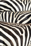 Kenya, Amboseli National Park, Close Up on Zebra Stripes Foto af Anthony Asael