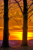 USA, Pennsylvania, King of Prussia. Tree Silhouette at Sunrise Photographic Print by Jay O'brien