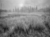 USA, Wyoming, Yellowstone, Cold Foggy Morning Photographic Print by John Ford