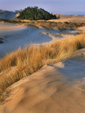 USA, Oregon, Dunes National Recreation Area. Landscape of Sand Dunes Photographic Print by Steve Terrill