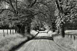 USA, Tennessee, Great Smoky Mountains NP. Dirt Road in Cades Cove Photographic Print by Dennis Flaherty