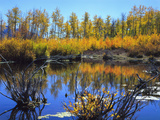 Utah. USA. Willows and Aspens in Autumn at Beaver Pond in Logan Canyon Photographic Print by Scott T. Smith