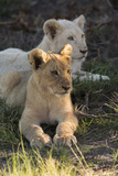 South Africa, East London. Inkwenkwezi Game Reserve. Lion Cubs Photo by Cindy Miller Hopkins