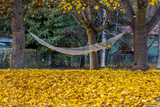 Hammock Looking Inviting in a Leaf Strewn Yard in Whitefish, Montana Photographic Print by Chuck Haney