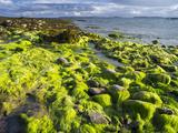 Isle of Lewis, Coast at the Eye Peninsula. Scotland in July Photo by Martin Zwick