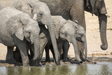 Namibia, Etosha National Park. Elephants Drinking at Waterhole Photo by Wendy Kaveney