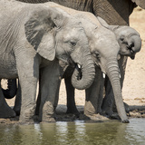 Namibia, Etosha National Park. Elephants Drinking at Waterhole Photo af Wendy Kaveney