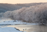 Red Crowned Cranes in Frozen River at Dawn Hokkaido Japan Photo by Peter Adams