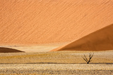Namibia, Namib-Naukluft Park. Sand Dunes and Lone Dead Tree Photo by Wendy Kaveney