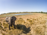 Botswana, Moremi Game Reserve, Elephant in Wetlands of Okavango Delta Photo by Paul Souders
