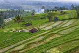 Water-Filled Rice Terraces, Bali Island, Indonesia Photo by Keren Su