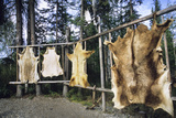 Hides Stretched over Wooden Racks for Tanning. Alaska (PR) Photographic Print by Angel Wynn