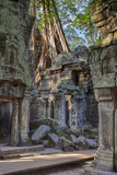 Cambodia. Ta Prohm Temple Ruins. Tree Growing Atop the Ruins Photo by Charles O. Cecil
