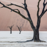 Namibia, Namib-Naukluft Park, Dead Vlei. Three Dead Trees at Sunrise Photo by Wendy Kaveney