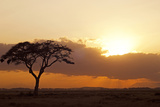 Kenya, Amboseli National Park, Lonely Tree at Sunset Photo by Anthony Asael