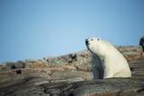 Canada, Nunavut, Repulse Bay, Polar Bear Sitting on Mountain Slope Photo by Paul Souders