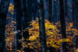 Canada, Ontario. Autumn Abstract of Forest Photo by Bill Young