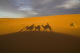 North Tafilalet, Erfoud, Merzouga, Erg Chebbi, Dromedary Camel Caravan Foto von Emily Wilson