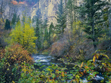 Utah. Along Logan River in Autumn. Logan Canyon. Uinta-Wasatch-Cache Photographic Print by Scott T. Smith