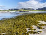 Isle of Lewis, the Uig Bay (Traigh Uuige) with Bladder Wrack. Scotland Photo by Martin Zwick