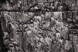 Norway, Svalbard Archipelago. Bird Colony on Cliff Photo by Bill Young