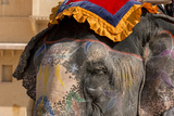 Elephants. Amber Fort. Jaipur. Rajasthan. India Photo by Tom Norring