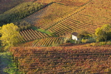 Vineyards, Near Alba, Langhe, Piedmont, Italy Photo by Peter Adams