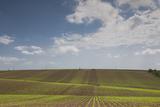 Romania, Danube River Delta, Bestepe, Farm Fields, Spring Photo by Walter Bibikow
