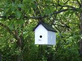 White Birdhouse Photo by Anna Miller