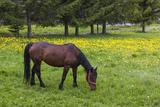 Romania, Transylvania, Tihuta Pass, Horse in Pasture Photo by Walter Bibikow