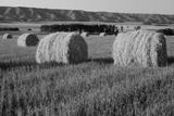 Canada, Manitoba, Rolled Hay Bales in Field Photo by Mike Grandmaison