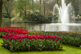A Manicured Flower Garden of Tulips with a Lake and Water Fountain Photo by Sheila Haddad