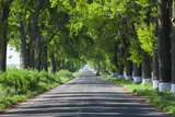 Romania, Danube River Delta, Salcioara, Country Road Photo by Walter Bibikow