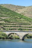 Portugal, Peredos Dos, Bridge and Vineyards Along Douro River Photo by Jim Engelbrecht