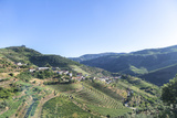 Portugal, Douro River Valley, Terraced Vineyards Photo by Jim Engelbrecht