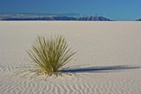 Sand Patterns, Yucca, White Sands Nm, Alamogordo, New Mexico Photo by Michel Hersen