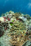 Coral Reef Diversity, Fiji Photo by Pete Oxford