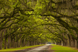 Georgia, Savannah, Mile Long Oak Drive at Historic Wormsloe Plantation Photo by Joanne Wells