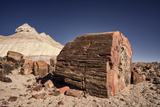 Petrified Forest National Park, Arizona Photo by Rob Sheppard