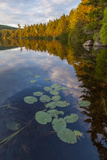 Water Lilies and Cloud Reflection on Lang Pond, Northern Forest, Maine Photo by Jerry & Marcy Monkman