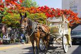 Horse and Carriage, Guadalajara, Jalisco, Mexico Foto von Douglas Peebles