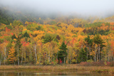 USA, Maine, Acadia National Park, Fog at Beaver Damn Pond in the Fall Photo by Joanne Wells