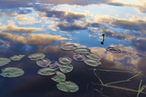 Water Lilies and Cloud Reflection on Lang Pond, Northern Forest, Maine Foto von Jerry & Marcy Monkman